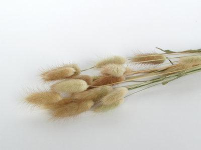 doopsuiker droogbloemen naturel