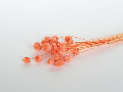 doopsuiker droogbloemen abrikoos